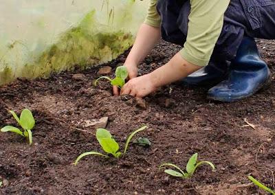 hadits keutamaan menanam tanaman