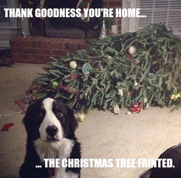 Dog Shaming Christmas Tree Fainted - Friday Frivolity - Holiday Cheer, One Way or Another - Christmas Memes + LINKY for all things Fun, Funny, Happy & Hopeful!