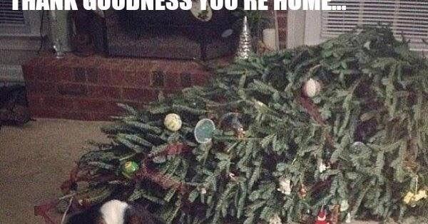 Dog Christmas Tree Meme.Dog Christmas Tree Meme Fxund Us