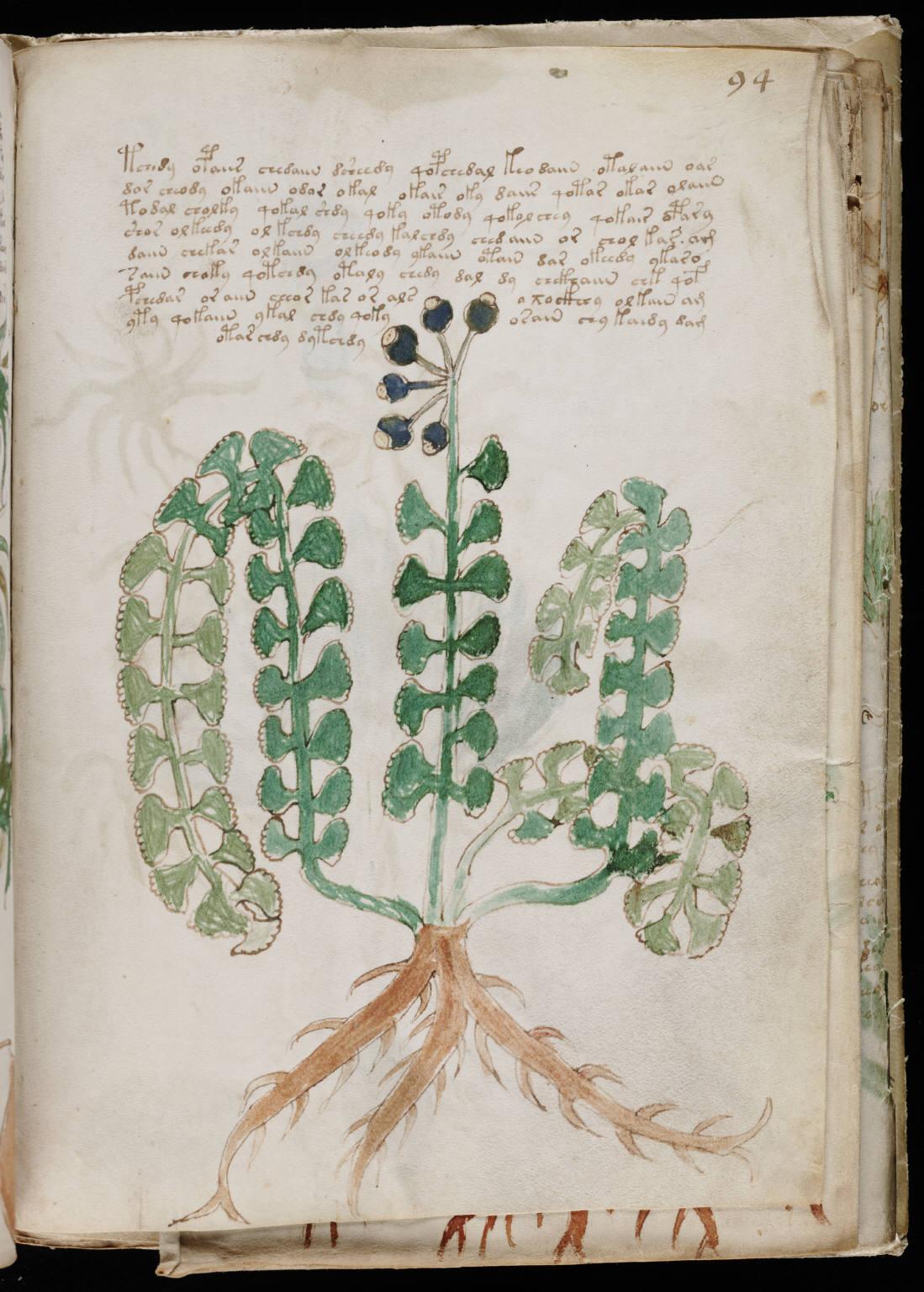 manuscrito167