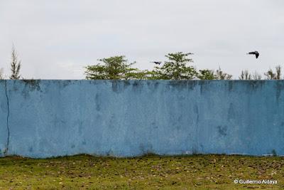 En Isla de Pinos (Cuba), by Guillermo Aldaya / AldayaPhoto