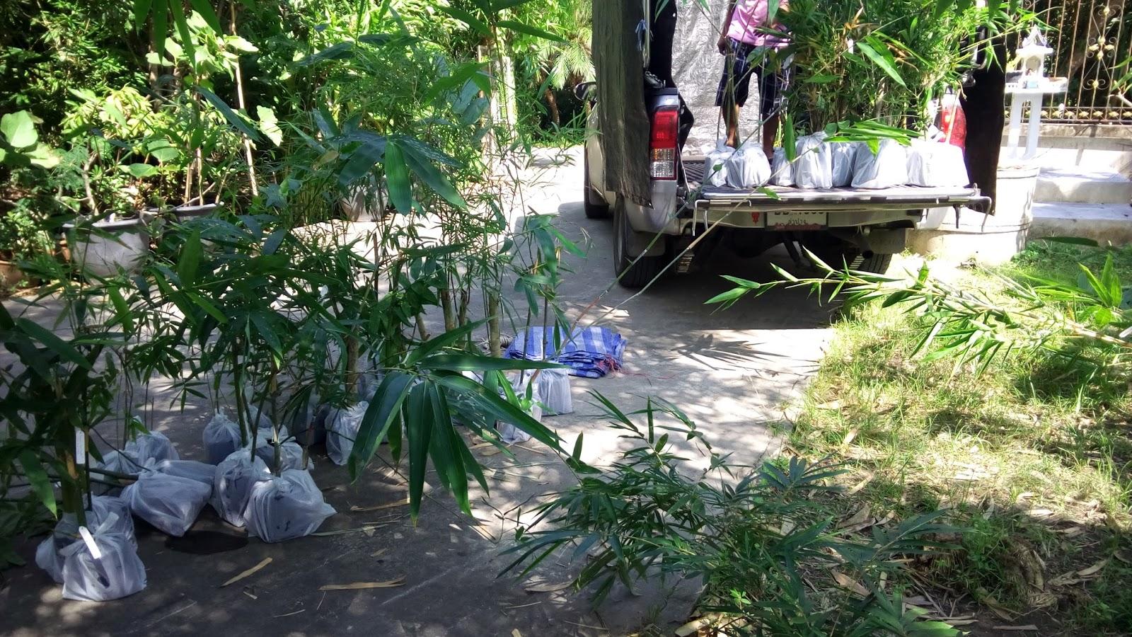 boonthammee bamboo garden bbg u2014 สวนไผ บ ญธรรมม