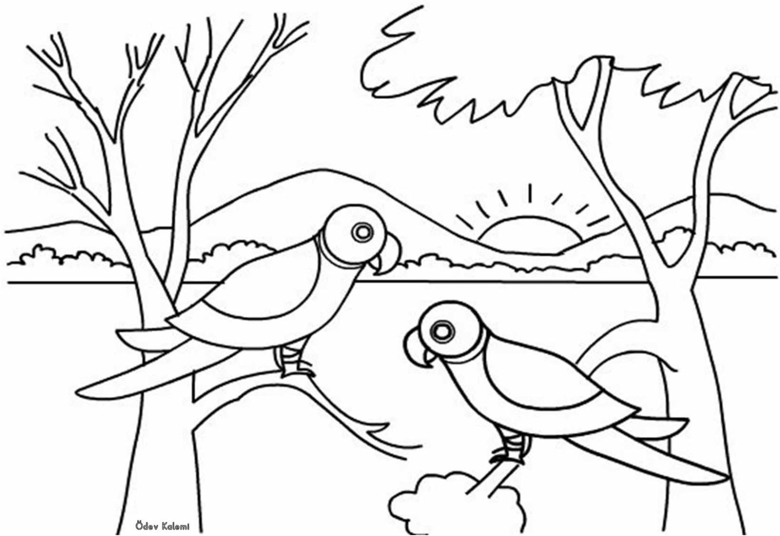 Boyama çalişmasi Papağan 1 Sinif Görsel Sanatlar Dersi ödev Kalemi
