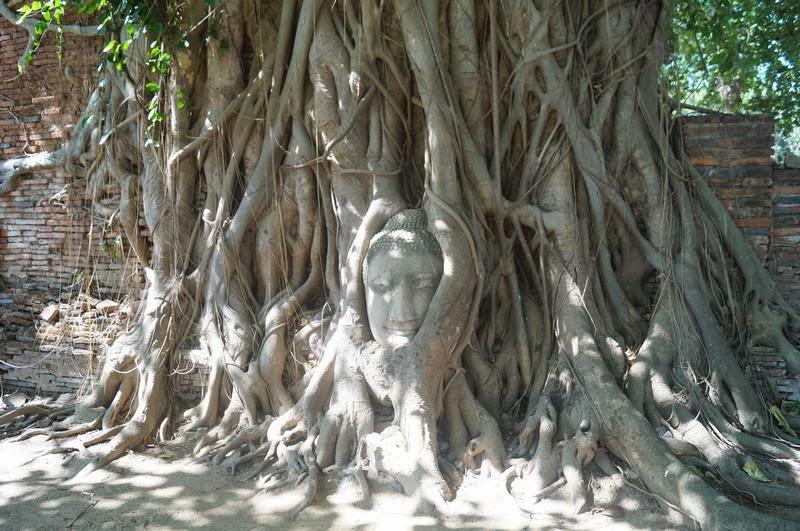 ruinas ayutthaya, Wat Mahathat, cabeza buda entre raices