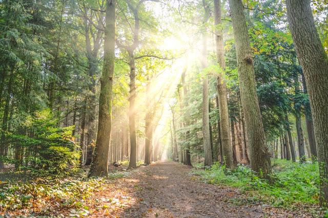 kolaborasi kunci kelestarian hutan, sosial dan ekonomi masyarakat desa sekitar hutan