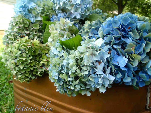 Antique copper pot filled with huge blue hydrangeas