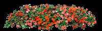 Floreira vermelha em png