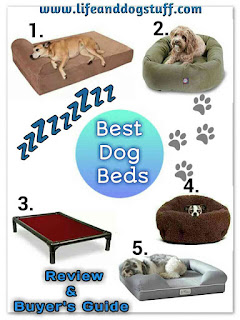 The Best Dog Beds Review and Buyer's Guide