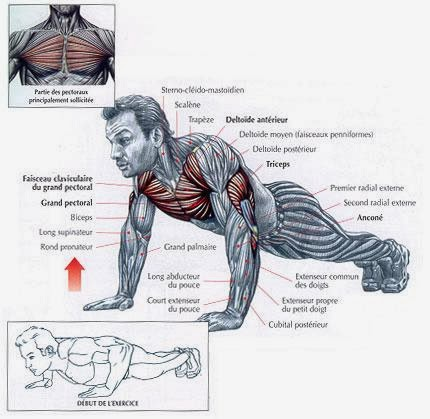 Muscle fitness pectoraux exercices - Pectoraux developpe couche ...