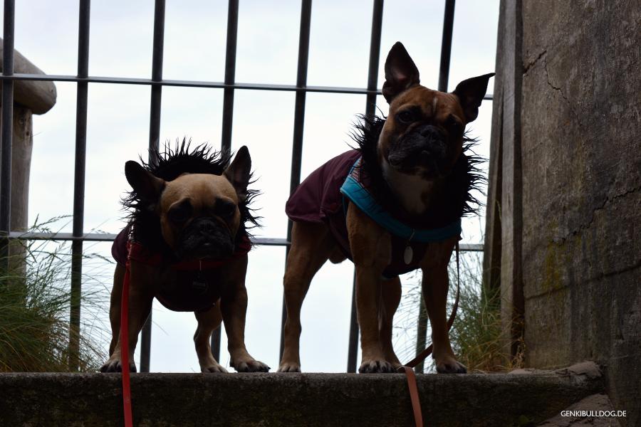Urlaub in Holland Texel De Bollekamer mit Hund