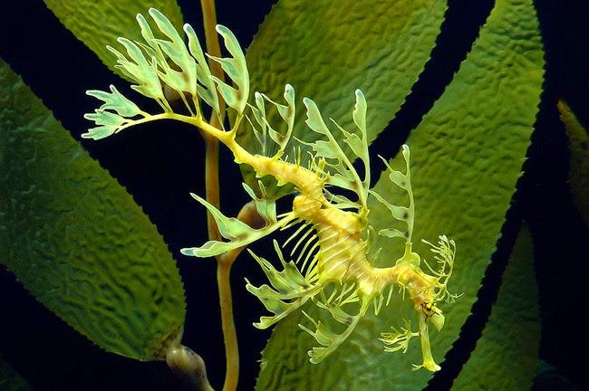 Hewan-Hewan Laut yang Unik Di Dunia Hewan-Hewan Laut yang Unik Di Dunia 17
