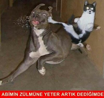 kedi köpek caps