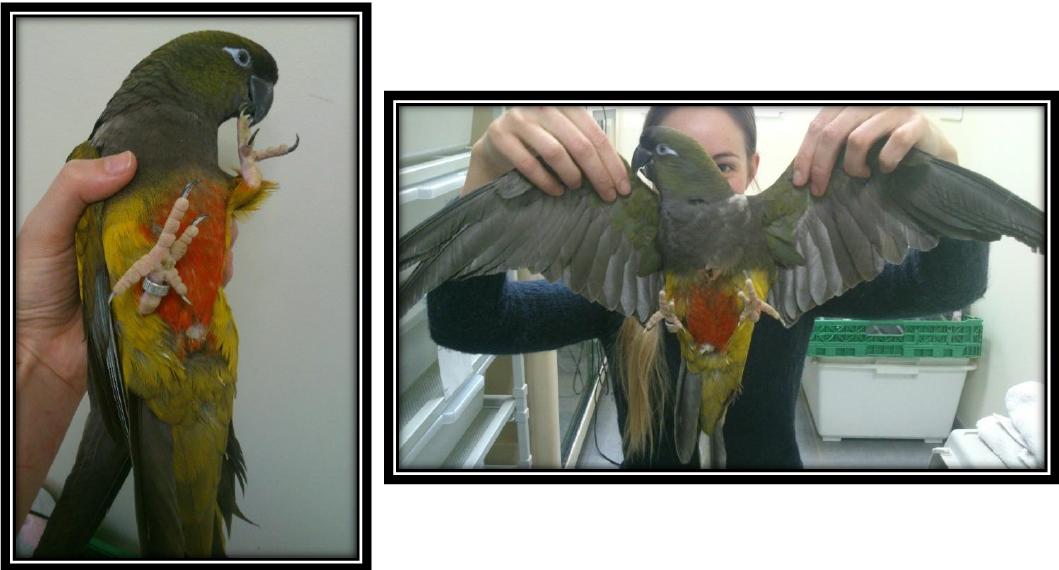 Parrot Medical Training