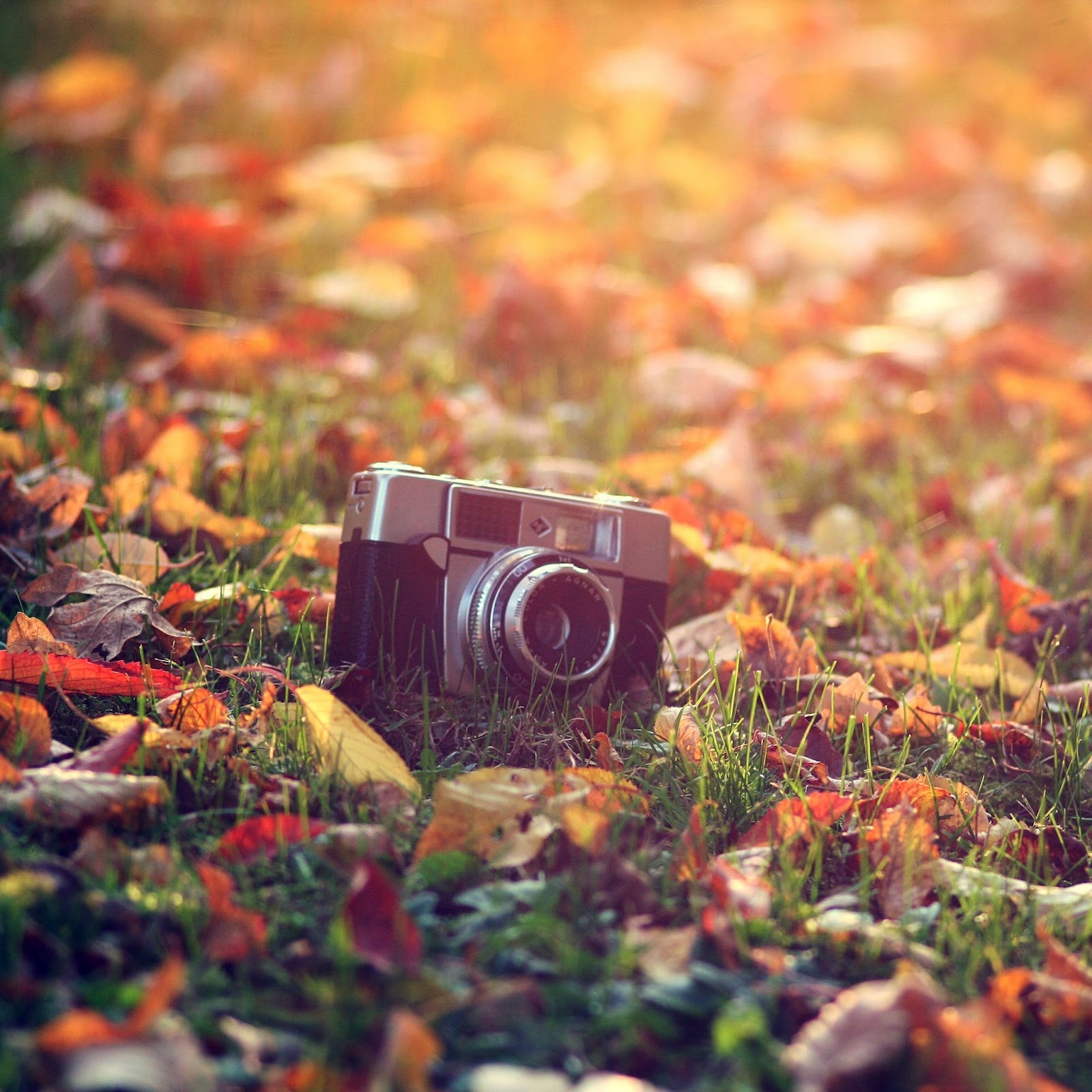 Autumn Themed HD Wallpapers for The New iPad - Gadgets ...