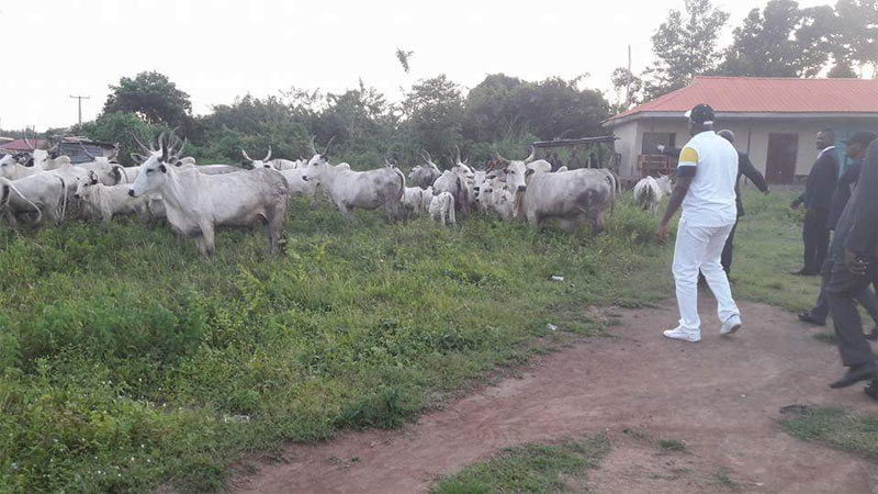 Grazing ban: Governor Fayose arrests cow in Ekiti