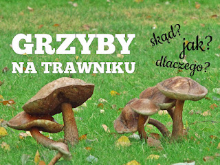 skąd jak i dlaczego na trawniku rosną grzyby