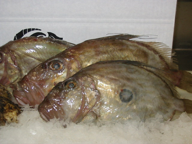 -L!fe SeeM L!ke A Ra!nBoW LaYeR-: Apa Itu Ikan Dory