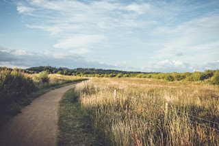 Un chemin qui traverse les champs