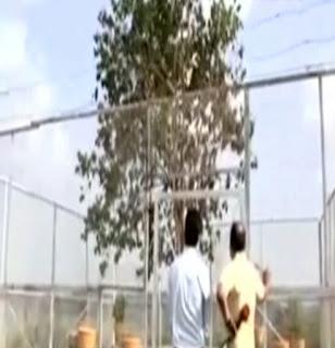 vvip tree in india