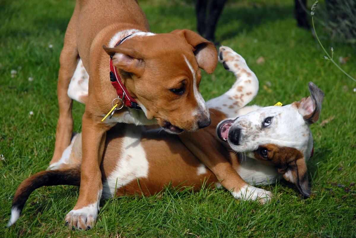 Dog S Haunches