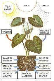 Conoblog La Nutrici 243 N Y Respiraci 243 N De Las Plantas Y Los Vegetales
