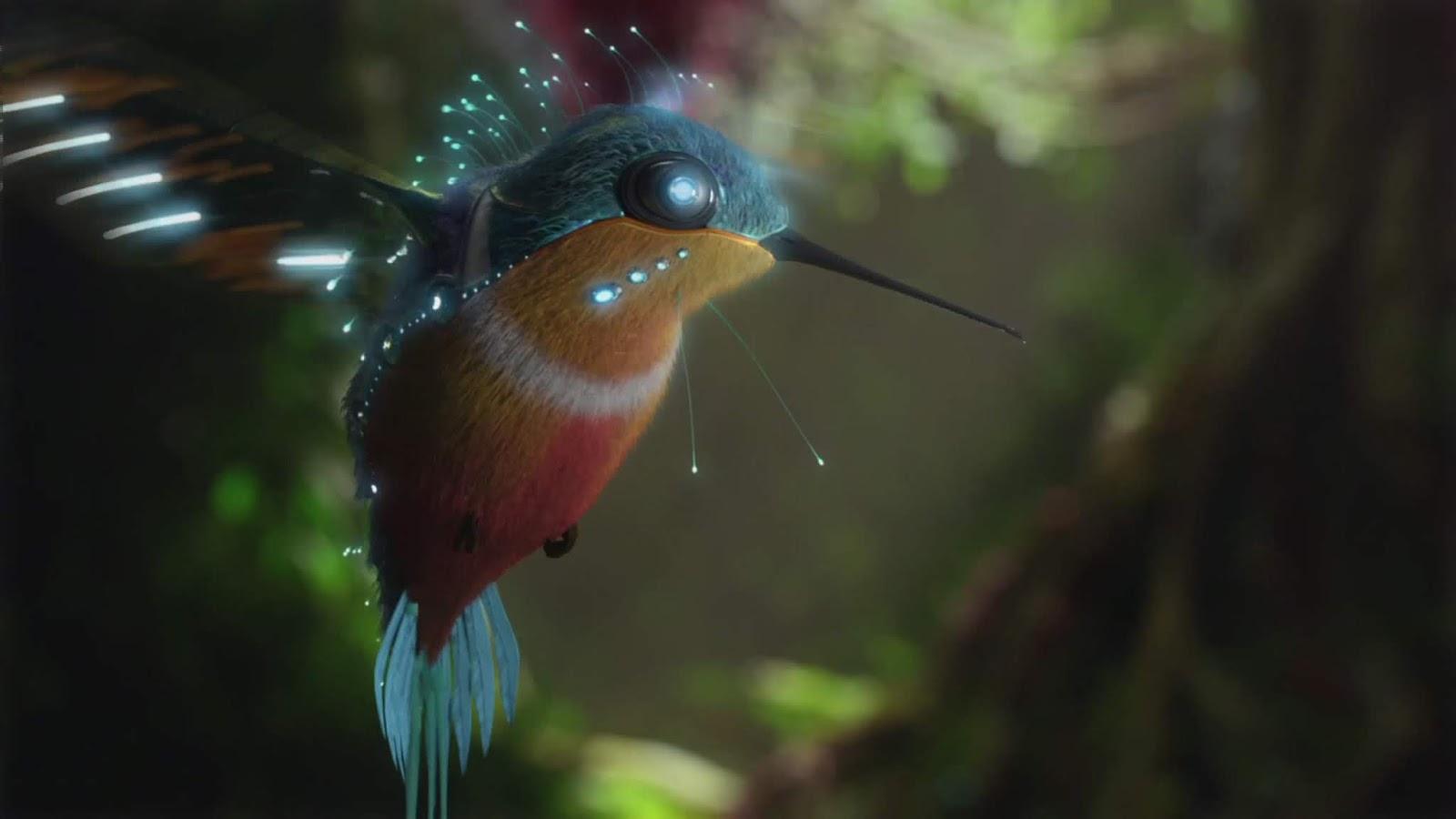 Cool WallPaper: 4K Ultra HD demo video hummingbird Samsung