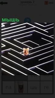 Черно белый лабиринт и внутри заблудилась мышь, показывая голову