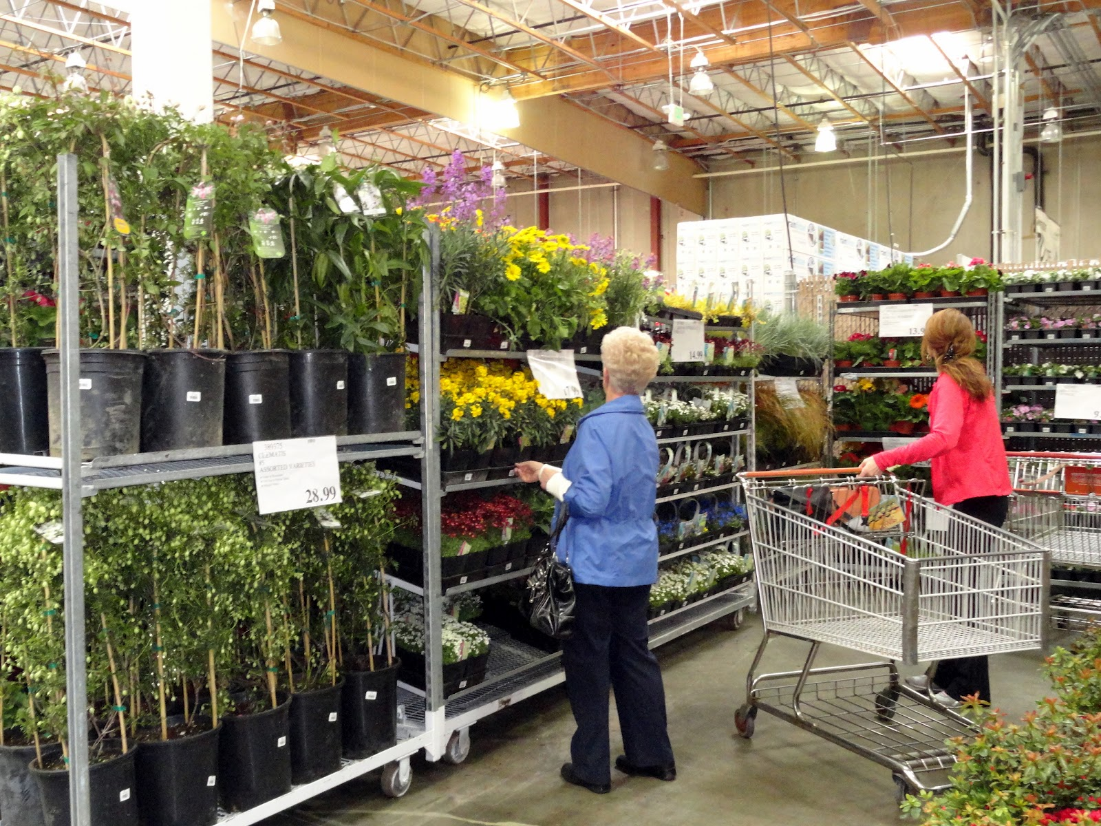 Costco plants fabulous costco funeral flowers costco wholesale gallery of some people buy a costco membership just for the deals they find on electronics with costco plants izmirmasajfo