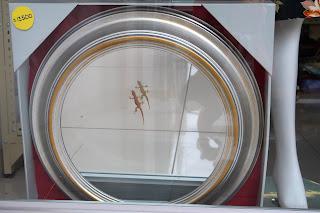 Gecko in front of mirror in store window
