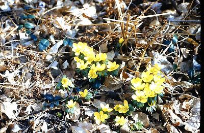 Friends Of Herrontown Woods Spring Flower Bulb Donation