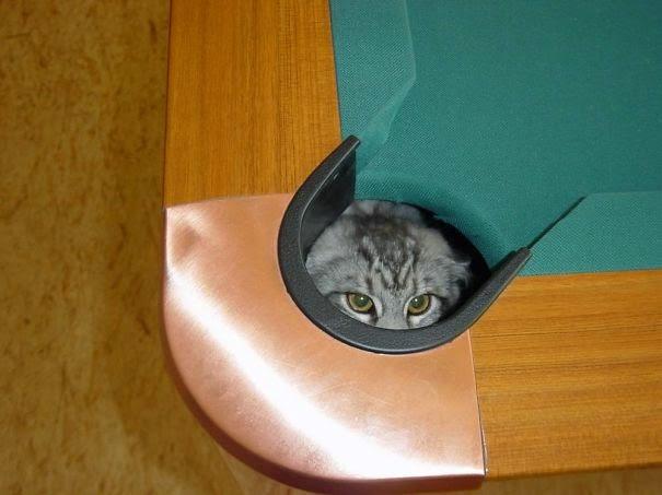 omorfos-kosmos.gr - 30+ Γάτες νίντζα (Εικόνες)
