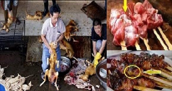 perbedaan daging anjing dan ayam