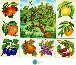Где что растёт игра СССР. Ботаническое лото игра СССР. Игра растения СССР.