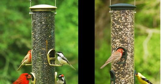 Wild Birds Unlimited Maintaining A Bird Feeder