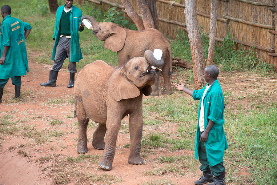 Orfanato elefantes, Zambia