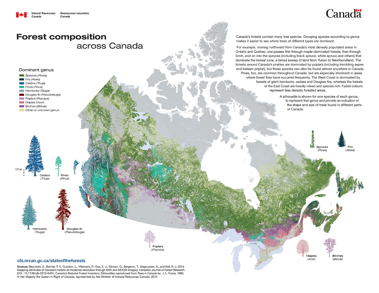 Forest composition across Canada
