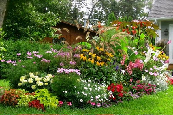 Cara Merawat Tanaman Bunga di Halaman Rumah