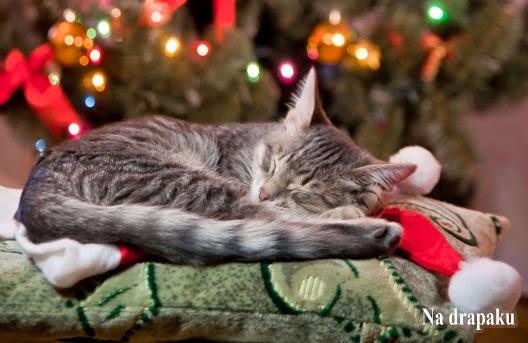 Co zrobić z kotem w Święta?