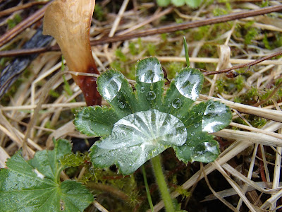 Wiosenne grzyby, grzyby w kwietniu, grzyby z Czerwonej List, grzybobranie w kwietniu, grzyby na Orawie