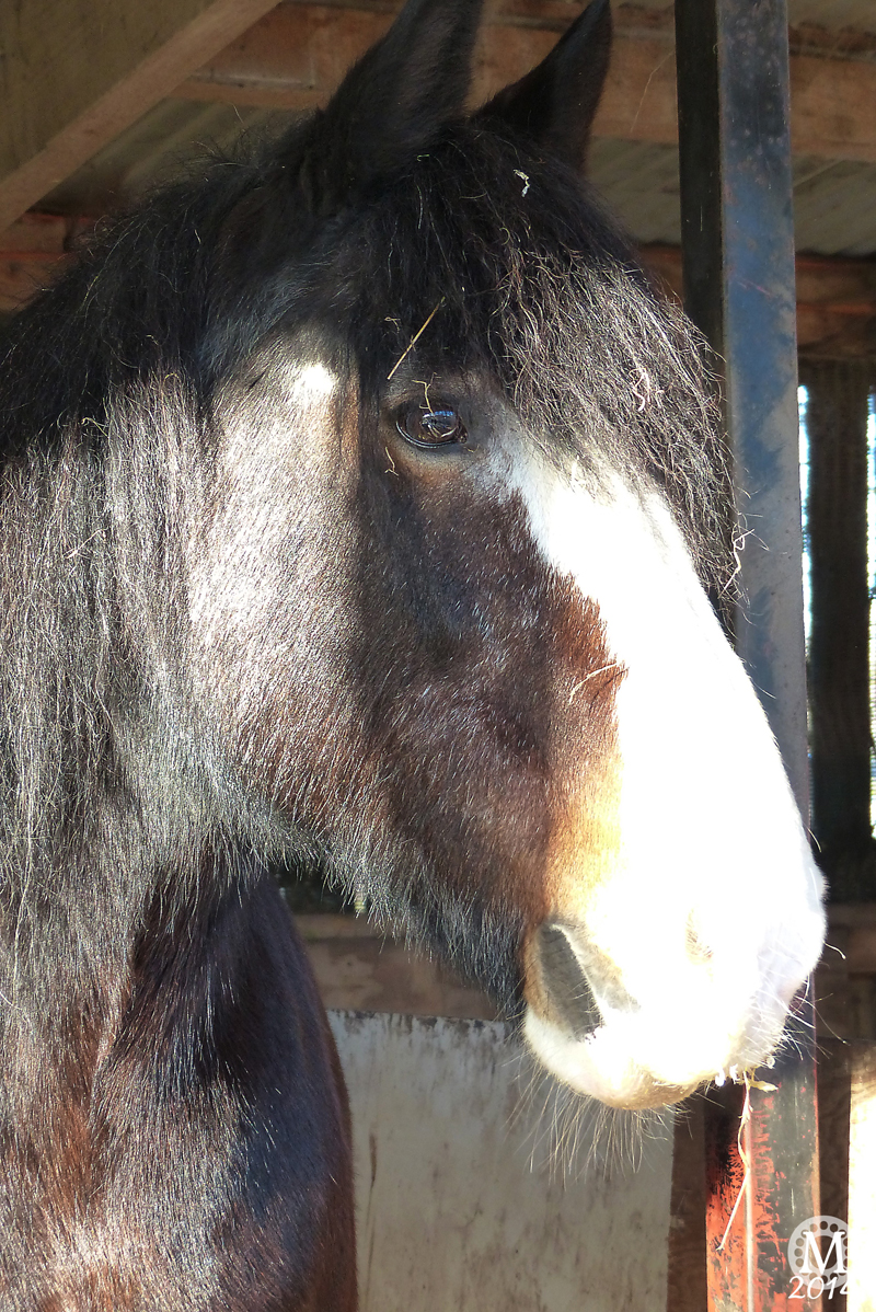 Horse at Foxborough Farm, Hainault Forest Country Park