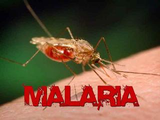 Gejala, Penyebab, dan Cara Mencegah Malaria