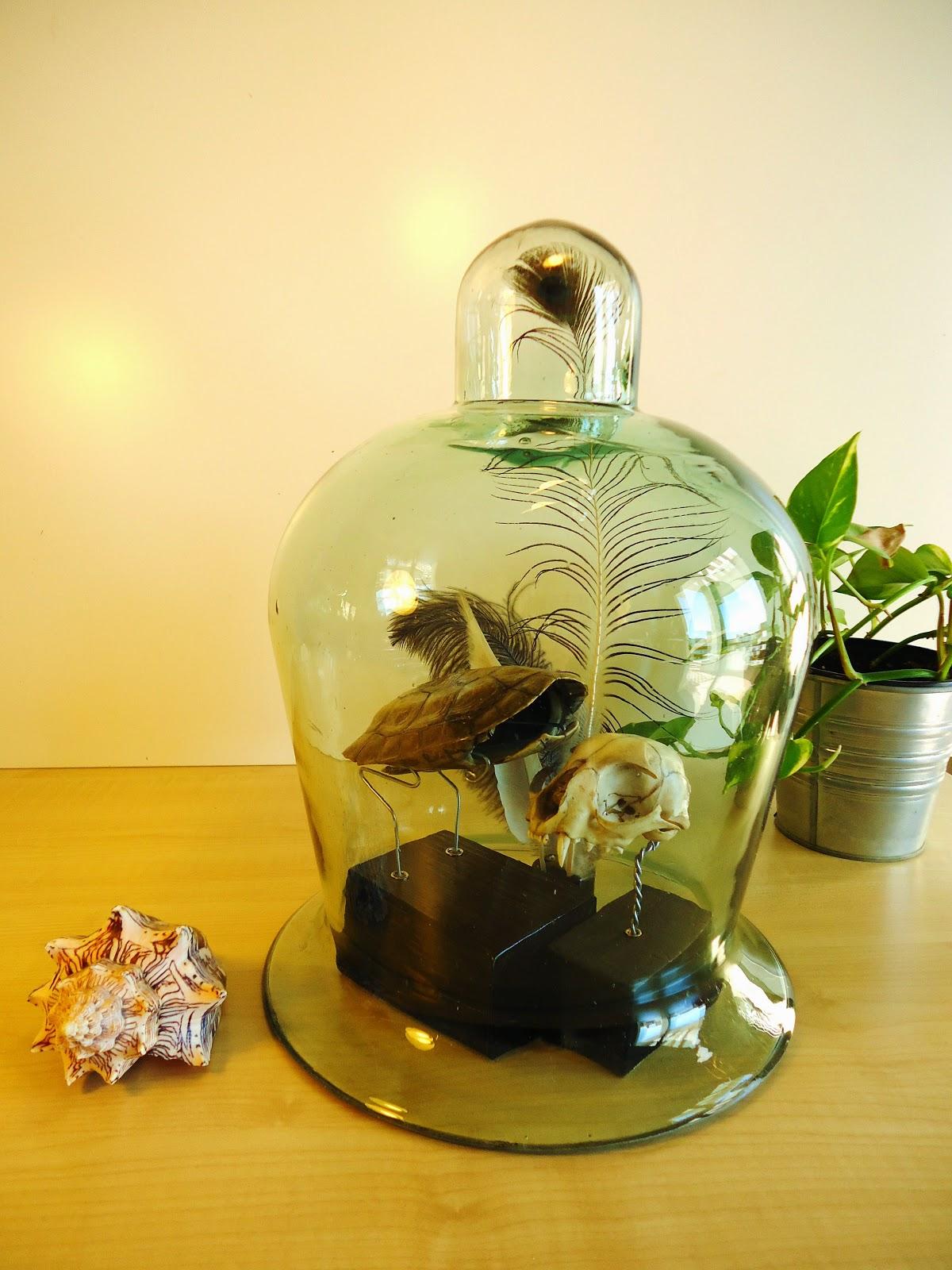 Urna campana cristal antigua vendido - Campana de cristal ikea ...