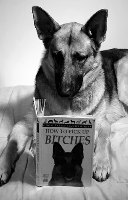 Funny Dog Reading How To Pick Up Bitches Book