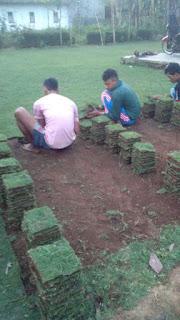 Harga jual Rumput manila surabaya dari tempat budidaya kita di malang