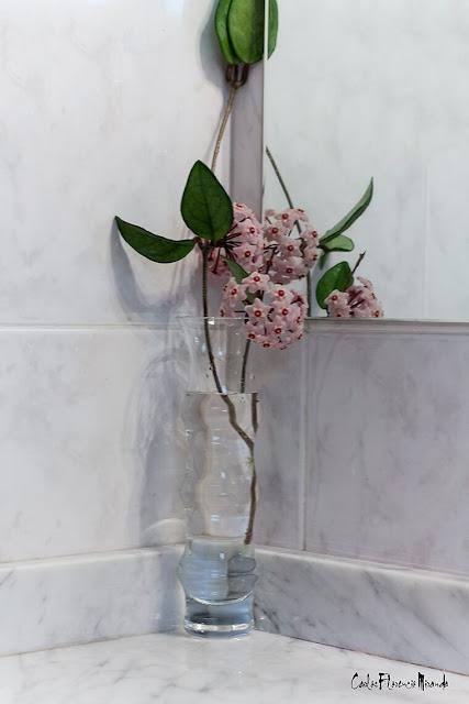 Flores de clepia en un florero frente al espejo