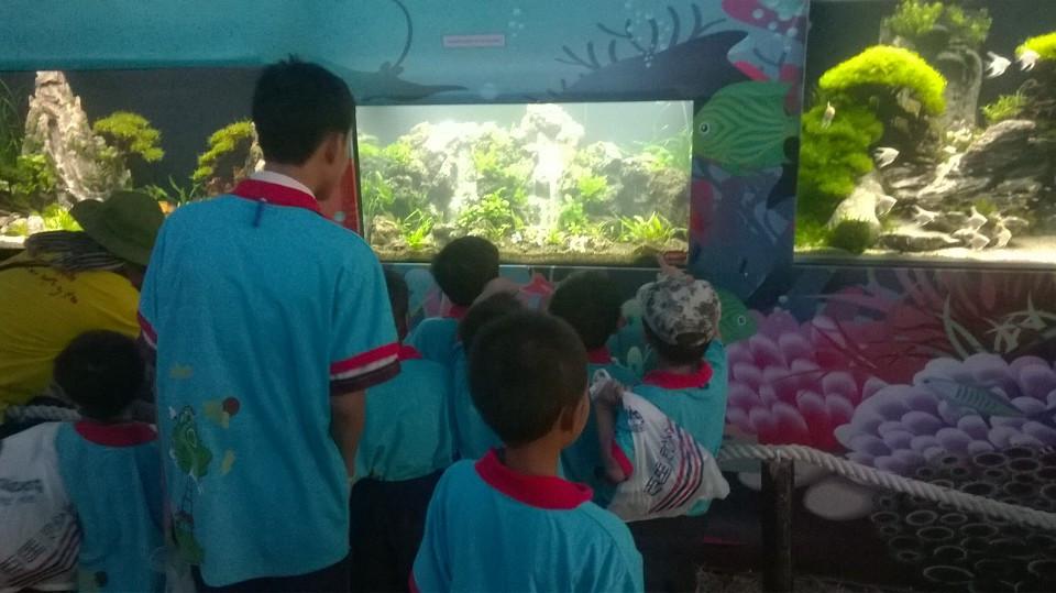 Du khách thích thú với hồ thủy sinh của Vinh Aqua - Tao Đàn - Xuân 2017