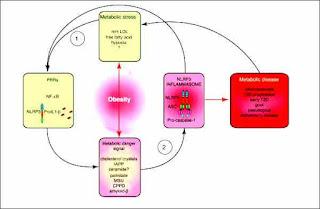 NLRP3 inflamasone response