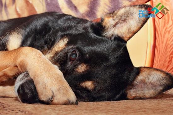 Cachorro com cheiro forte