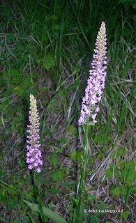 fattoria didattica orchidea rose orto ortica savigno bologna valsamoggia zocca