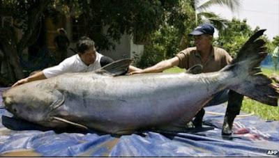 Memancing merupakan hobi dan kegemaran banyak orang dari banyak sekali kalangan  Lihat 10 Umpan Ikan Patin Ampuh Ganas Banget